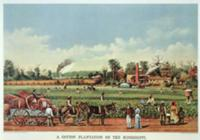 A Cotton Plantation on the Mississippi - the Harve