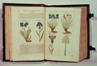 Iris (Flowers de-luce), six varieties from 'The Fi
