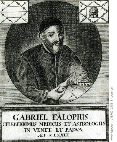 the italian anatomist gabriel fallopius Gabriele falloppio was perhaps the most outstanding and versatile of 16th century italian anatomists he was born in modena, the son of geronimo and caterina falloppio, and served as canon at the cathedral of that town.