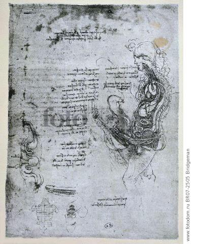 Coition of Hemisected Man and Woman, facsimile copy (pen & ink on paper) , artist: Vinci, Leonardo da (1452-1519) (after)