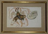 Metamorphosis, c.1946 (w/c, pen & black ink on pap