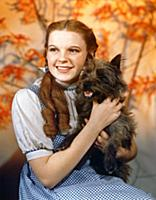 4062048 Judy Garland, The Wizard Of Oz 1939 Direct
