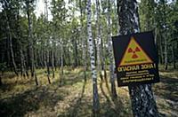 The forest in the 30 kilometer alienation zone aro