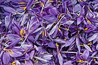 Saffron Crocus flowers with stigmas removed. 'Safr