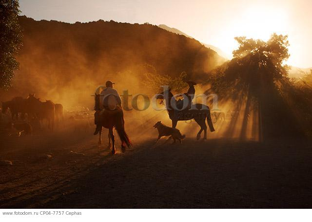 Huasos herding sheep at sunset in the Tumunan Valley  near San Fernando  Chile.