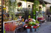 Christmas display of Chlorophylle florists shop.