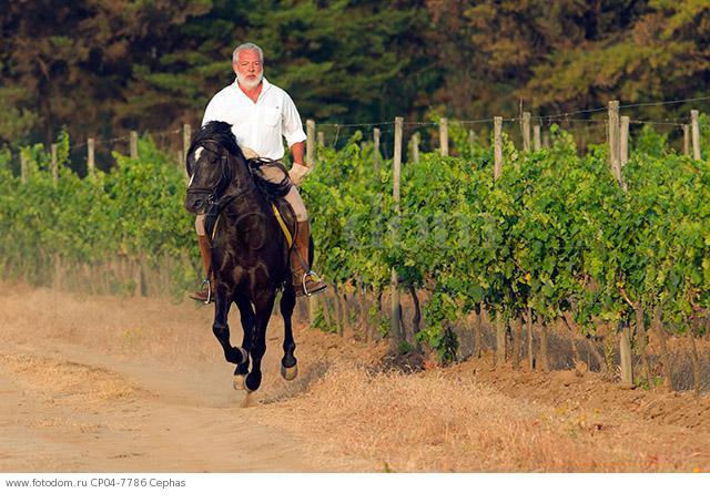 Count Francesco Marone Cinzano of Col d'Orcia in Tuscany and La Reserva de Caliboro in Chile.  Maule Valley  Chile.
