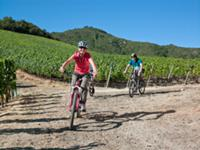 Cycling through the Clos Apalta vineyards of Lapos