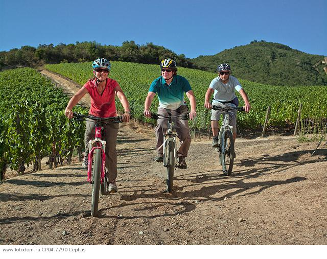 Cycling through the Clos Apalta vineyards of Lapostolle  Colchagua Valley  Chile.