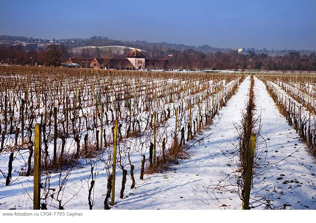 Denbies vineyard in the snow with the winery and visitor centre beyond. Dorking  Surrey  England.