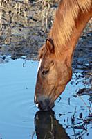 Домашний скот. На фото - лошадь.