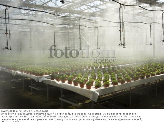 Выращивание в теплице специй 99