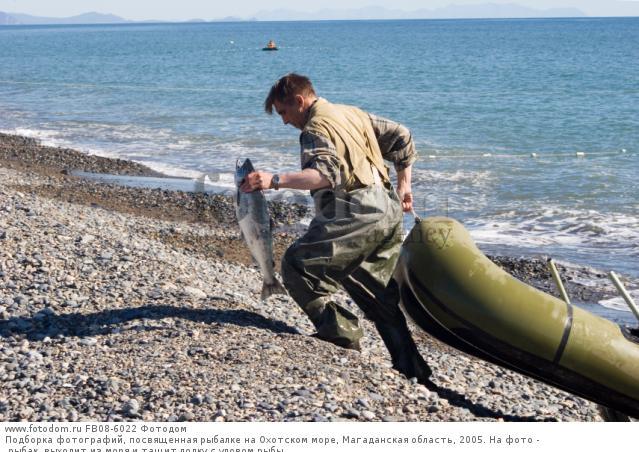 Ученые прогнозируют зимой сложную сельдевую путину в Охотском море