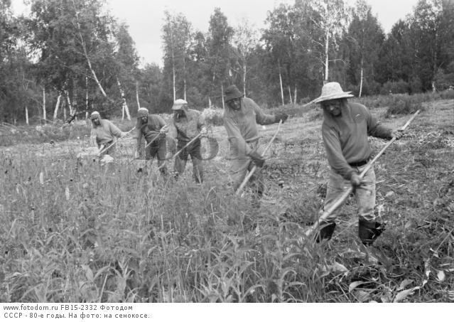 СССР - 80-е годы. На фото: на сенокосе.