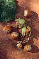 Freshly picked hazelnuts