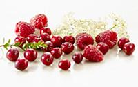 Cranberry, Vaccinium oxycoccos, several berries wi