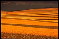 Strip Cultivation for Wind Erosion , Montana