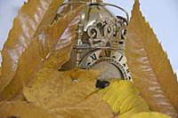 Concept image of Autumn leaves, clock, seasons, wi
