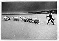 BURGH ISLAND scan of b/print. Shepherd John Stanes