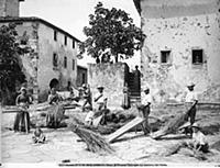 <caption>Threshing wheat in Calcinaia</caption><da