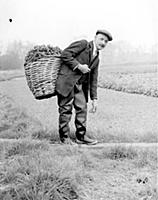 A watercress grower, wearing rubber waders, 1938.