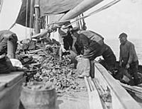 The opening of the Oyster Season Oyster Fishing