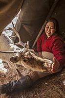 'Caribou (Rangifer tarandus) being fed salt inside
