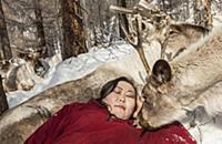 'Caribou (Rangifer tarandus) with Tsataan woman sl