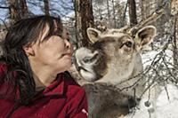 'Caribou (Rangifer tarandus) being kissed by Tsata