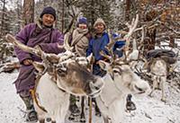 'Caribou (Rangifer tarandus) and Tsataan reindeer