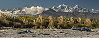 'Toitoi (Austroderia sp) grass and mountains, Thre