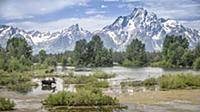 Фотографии дикой природы от Jim Stamates