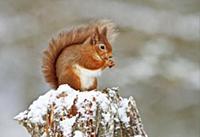 Фотографии природы от Jules Cox