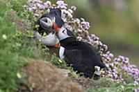 Фотографии дикой природы от Vince Burton