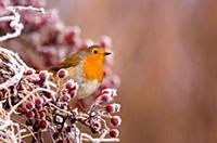Фотографии дикой природы от Andrew Parkinson