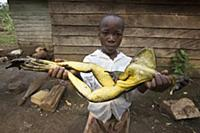 Самая большая лягушка в мире