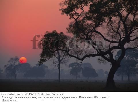 Восход солнца над ландшафтом парка с деревьями. Пантанал (Pantanal), Бразилия.