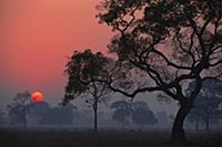Восход солнца над ландшафтом парка с деревьями. Па