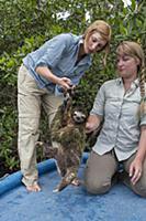 Pygmy Three-toed Sloth (Bradypus pygmaeus) biologi
