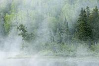 Fog over river and forest, Baptism River, Minnesot