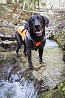 Собаки на службе природоохранной биологии