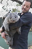 Common Wombat (Vombatus ursinus) orphan held by sa