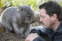 Common Wombat (Vombatus ursinus) orphan with sanct