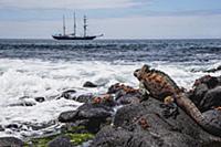 Морская игуана (Amblyrhynchus cristatus) задумчиво