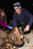 Mountain Lion (Puma concolor) biologist, Chris Wil