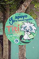 Cotton-top Tamarin (Saguinus oedipus) sign for con