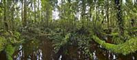 Stream in subtropical rainforest near Fox Glacier,