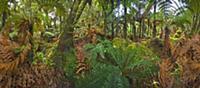 Subtropical rainforest near Fox Glacier, South Isl