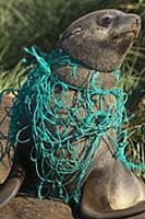 Последствия загрязнения планеты пластиком