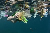 Plastic trash collected by snorkeler, Lesser Sunda